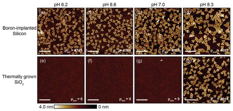 AFM images of DNA origami triangles adsorbed onto boron-implanted silicon substrates ( a – d ) and thermally grown silicon dioxide (SiO 2 ) substrates ( e – h ) as a function of deposition buffer pH. The substrates were cleaned with Piranha + HF. For the pH values below 8.3, the deposition buffer was 10 mM bis-tris HCl with a [MgCl 2 ] of 35 mM. For the pH value of 8.3, 1× tris-acetate- ethylenediaminetetraacetic acid (EDTA) with a [MgCl 2 ] of 35 mM was selected to stay within the buffer range. For all conditions, the deposition incubation time was ~1 h. Scale bars are 500 nm.