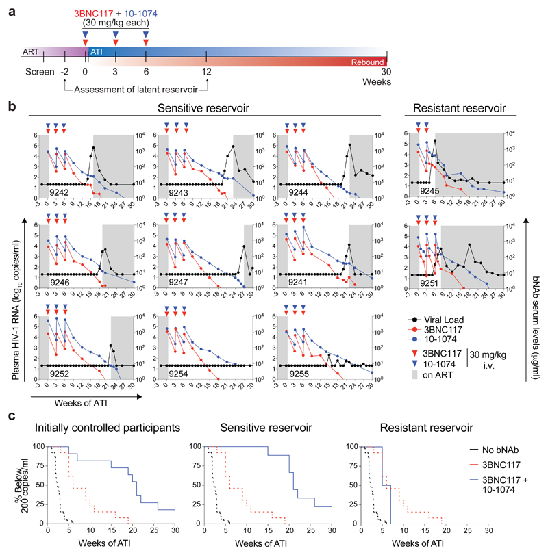 Delayed viral rebound with 3BNC117 and 10-1074 combination therapy during ATI. a , Study design. Red and blue triangles represent 3BNC117 and 10-1074 infusions, respectively. b , Plasma <t>HIV-1</t> RNA levels (black; left y-axis) and bNAb serum concentrations (3BNC117, red; 10-1074, blue; right y-axis) in the 9 bNAb-sensitive participants (left) and the 2 participants with pre-existing resistance against one of the antibodies (right). Red and blue triangles indicate 3BNC117 and 10-1074 infusions, respectively. Serum antibody concentrations were determined by TZM-bl assay. Grey shaded areas indicate time on ART. Lower limit of detection of HIV-1 RNA was 20 copies/ml. c , Kaplan-Meier plots summarizing time to viral rebound for the participants with HIV-1 RNA