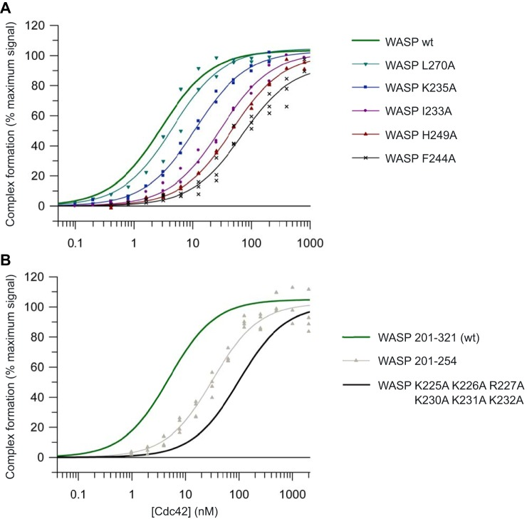 Direct SPA-binding data for the WASP GBD and mutant variants, with Cdc42. The indicated concentration of [ 3 H]GTP-labeled Cdc42 was incubated with GST-tagged WASP GBD variants, as appropriate. The SPA signal was corrected by subtraction of the background signal from parallel measurements in which the effector protein was omitted. The effect of the concentration of Cdc42 on this corrected SPA signal was fitted to a binding isotherm to give an apparent K d value and the signal at saturating Cdc42 concentrations. The data and curve fits are displayed as a percentage of this maximal signal. A, binding of representative mutants in the WASP GBD to Cdc42. B, binding of WASP BR hexa-mutant and C-terminal deletion mutant to Cdc42. 2–4 experimental replicates were performed for each WASP variant with 12 data points in each. A summary of all the binding data can be found in Table 2 .
