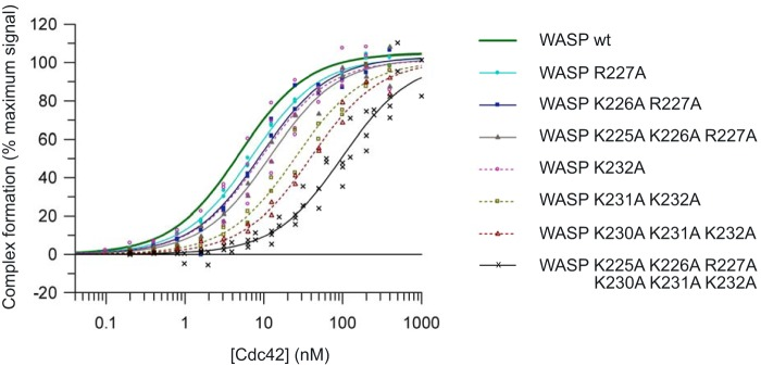 Direct SPA-binding data for the WASP GBD and mutant BR variants, with Cdc42. The indicated concentration of [ 3 H]GTP-labeled Cdc42 was incubated with GST-tagged WASP GBD BR variants, as appropriate, in each SPA. The SPA signal was corrected by subtraction of the background signal from parallel measurements in which the effector protein was omitted. The effect of the concentration of Cdc42 on this corrected SPA signal was fitted to a binding isotherm to give an apparent K d value and the signal at saturating Cdc42 concentrations. The data and curve fits are displayed as a percentage of this maximal signal. 2–4 experimental replicates were performed for each WASP variant with 12 data points in each. A summary of all the binding data can be found in Table 3 .