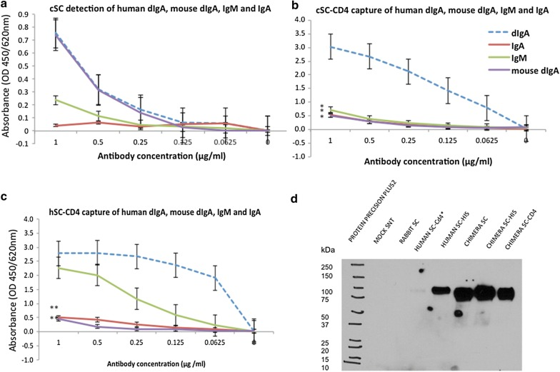 cSC preferential binding to dIgA/pIgA on ELISA and detection with monoclonal anti-human SC. Graphs show a cSC detection, b cSC-CD4 capture and c hSC-CD4 capture, to compare binding and provide dynamic range of cSC and hSC binding to human and mouse dIgA, human IgA and human IgM and d monoclonal anti-human SC antibody (AB17377; Abcam, Abingdon UK) detection of 80 kDa hSC and cSC. Note: cSC and hSC not normalized for differences in yield/concentration of active SC, error bars indicate standard error as calculated in Excel. Asterisks indicate statistical significant with reference to dIgA [p value