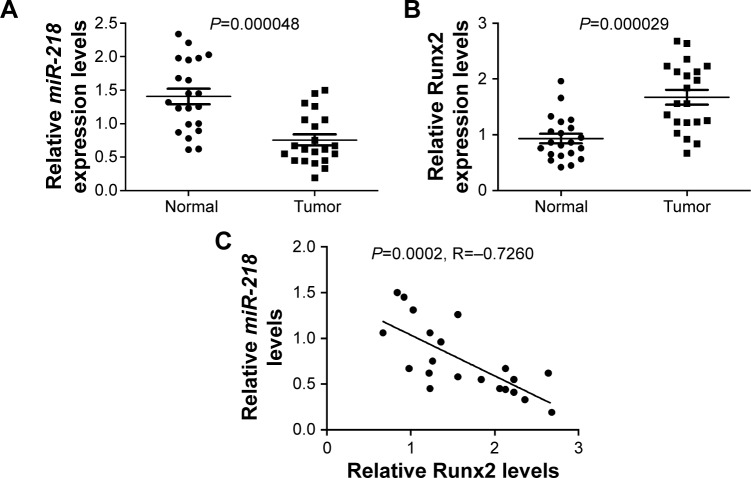 Expressions of <t>miR-218</t> and Runx2 in PTC tissues. Notes: qRT-PCR was performed to detect the expressions of ( A ) miR-218 and ( B ) Runx2 mRNA in PTC tissues and matched adjacent normal tissues. ( C ) Correlation analysis between miR-218 and Runx2 mRNA expressions in PTC tissues. Abbreviations: PTC, papillary thyroid cancer; qRT-PCR, quantitative real-time PCR.