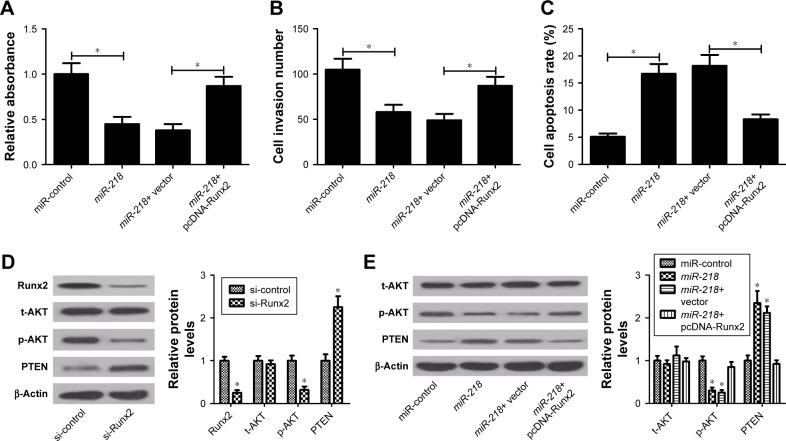 miR-218 exerts anticancer effects in PTC via inactivation of PTEN/PI3K/AKT pathway by targeting Runx2 in vitro. Notes: After TPC-1 cells were transfected with miR-218 alone or in combination with pcDNA-Runx2, cell viability, invasion, and apoptosis were examined by ( A ) CCK-8 assay, ( B ) Transwell invasion assay, and ( C ) flow cytometry analysis, respectively. ( D and E ) The protein levels of phosphorylated AKT (p-AKT) (Ser473), total AKT (t-AKT), and PTEN were determined by Western blot in TPC-1 cells transfected with si-Runx2, miR-218 , miR-218 + pcDNA-Runx2, or respective controls blot. * P