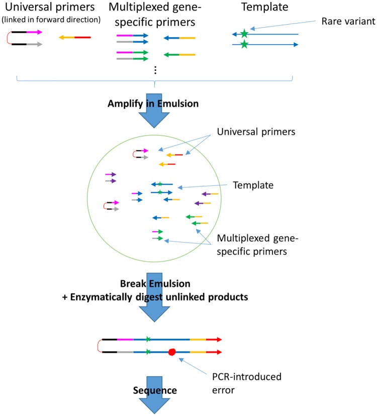 Overview of the targeted Pro-Seq workflow (described in detail in the Materials and methods ). In brief, double stranded DNA is loaded directly into droplets such that on average zero or one template molecule is incorporated in each droplet. Off-target DNA (not shown in figure) is also loaded into droplets, but does not amplify. Within each droplet are multiplexed gene-specific primers, and the Pro-Seq universal 5' PEG-linked primers. The droplets are PCR cycled such that all copies of the starting template are linked to the universal linked primers (shown in detail in S2 Fig ). The emulsions are then broken, and the un-linked strands are digested and cleaned up. After quantification, the library is ready for sequencing.