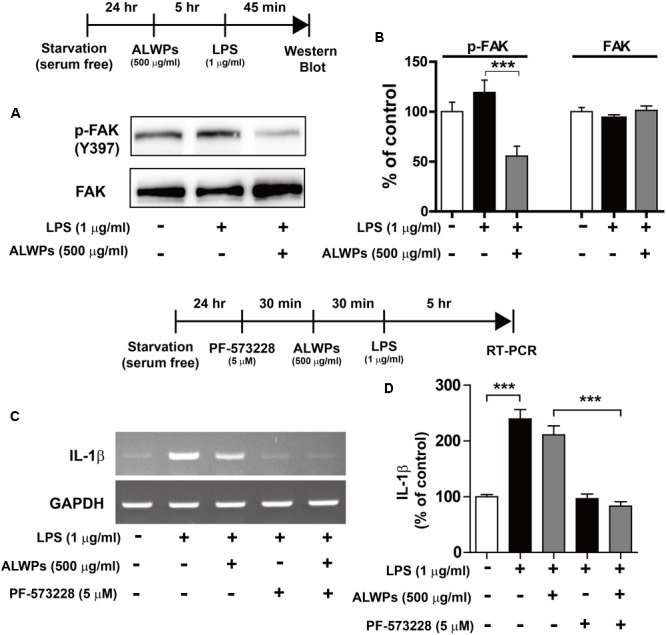 ALWPs decreased LPS-induced <t>FAK</t> phosphorylation in BV2 microglial cells. (A) BV2 microglial cells were pretreated with ALWPs (500 μg/ml) or PBS for 5 h, followed by treatment with LPS (1 μg/ml) or PBS for 45 min, and western blotting was performed with <t>anti-p-FAK</t> and anti-FAK antibodies. (B) Quantification of the data from (A) (p-FAK and FAK: con, n = 8; LPS, n = 8; ALWPs + LPS, n = 8). (C) BV2 microglial cells were pretreated with PF-573228 (a FAK inhibitor, 5 μM) for 30 min, followed by treatment with ALWPs (500 μg/ml) or PBS for 30 min and finally LPS (1 μg/ml) or PBS for 5 h. Total RNA was isolated, and IL-1β mRNA levels were measured by RT-PCR. (D) Quantification of the data from (C) (con, n = 30; LPS, n = 30; ALWPs + LPS, n = 30; PF-573228 + LPS, n = 30; PF-573228 + ALWPs + LPS, n = 30). ∗∗∗ p