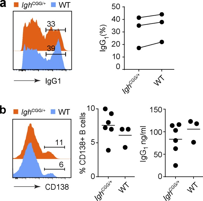 Isotype switching and plasmablast differentiation in Igh CGG/+ mice in vitro. (a) In vitro isotype switching. Purified Igh CGG/+ (CD45.2/2) and WT (CD45.1/1) B cells were cocultured in vitro with LPS and IL-4 to induce isotype switching to <t>IgG</t> 1 . Histogram shows IgG 1 staining by flow cytometry on day 3 of culture. Data are from three independent experiments and are quantified in the graph; proportions of IgG 1 + cells in Igh CGG/+ and WT B cells from the same experiment are connected by a line. P = 0.74 (unpaired t test). (b) AFC cell formation (as defined by CD138 expression) and IgG 1 secretion in purified B cells stimulated with LPS and IL-4 in vitro. Cells were presorted as in Fig. 3 a , and non–CGG-binding B cells were excluded from Igh CGG/+ cultures. Histograms are representative of, and graphs show pooled data for two independent experiments. n = 3 mice for WT and n = 6 mice for Igh CGG/+ CGG binding B cells. P = 0.33 for CD138 expression and P = 0.37 for supernatant IgG 1 . Numbers within flow plots indicate percentage of cells in the designated gate.