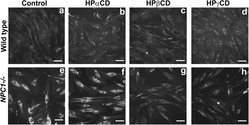 Effect of CD derivatives on cholesterol accumulation in NPC1 −/− cells. Primary fibroblast cells from a healthy donor or NPC patient were incubated with CD derivatives (1 mM) for 72 h and the levels of free cholesterol in cells were determined by staining with Filipin. Data shown are a representative of three independent experiments. Wild-type, primary fibroblast cells from a healthy donor; NPC1 -/- cells, primary fibroblast cells from an NPC patient. Scale bar = 50 μm