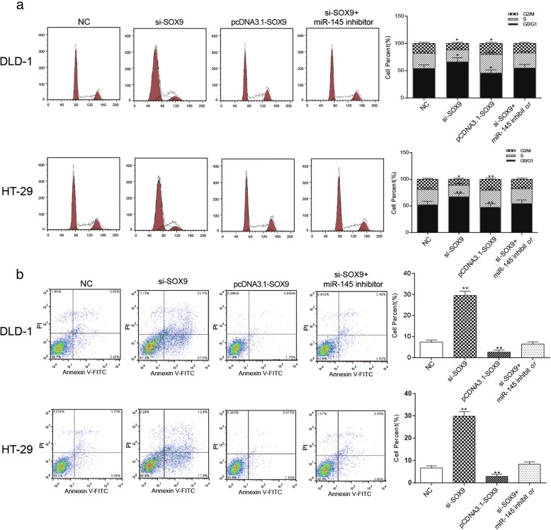 Effects of SOX9 on cycle and apoptosis of colorectal cancer cells a the cell cycle was assessed by flow cytometry, the number of cells in G1 phase was the most in the si- SOX9 group and was the least in pcDNA3.1- SOX9 group, the si- SOX9 + miR-145 inhibitor group was comparative to the NC group. b The apoptosis rate which measured by flow cytometry of pcDNA3.1- SOX9 group was the highest, si- SOX9 + miR-145 inhibitor group and NC group took the second place, and si- SOX9 group had the lowest apoptosis rate. * P