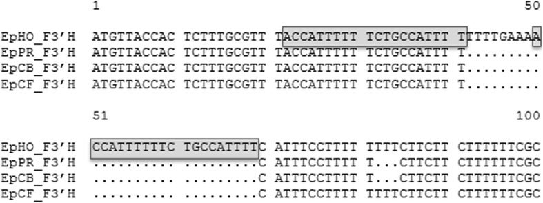 Multiple alignment of a selected part of the nucleotide sequences at the 5′-terminus of F3′H cDNA clones of Euphorbia pulcherrima cvs. 'Harvest Orange' ( Ep HO_ F3′H , KY273441), 'Premium Red' ( Ep PR_ F3′H , KY489667), 'Christmas Beauty' ( Ep CB_ F3′H , KY273439), and 'Christmas Feeling' ( Ep CF_ F3′H , KY273440). The grey-shaded frame highlights the repetition of ACCATTTTTTCTGCCATTTT from position 22 to 41 in position 50 to 69 (numbering from Ep HO_ F3′H )