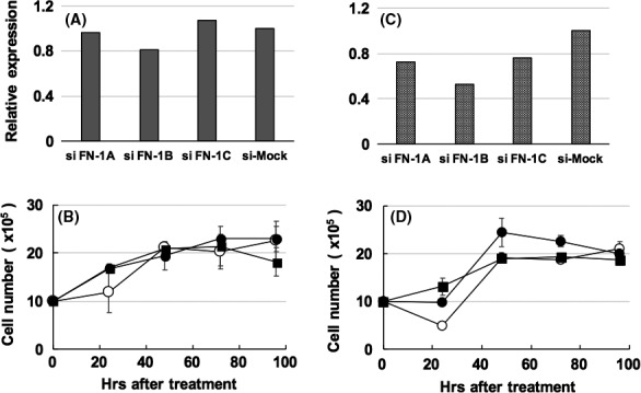 Knockdown effect of fibronectin 1 ( FN1 ) on the growth of HUVECKi2. A, Efficacies of Si‐oligos to FN1 mRNA in the attached HUVECKi2. B, Effects on the growth of the attached HUVECKi2 treated with FN 1 ‐Si‐oligo (open circle), control‐Si‐oligo (closed rectangle), and without Si‐oligo (closed circle). C, Efficacies of Si‐oligos to FN 1 mRNA in the suspended HUVECKi2. D, Effects of the growth of the suspended HUVECKi2 treated with the FN 1 ‐Si‐oligo (open circle), control‐Si‐oligo (closed rectangle), and without Si‐oligo (closed circle)
