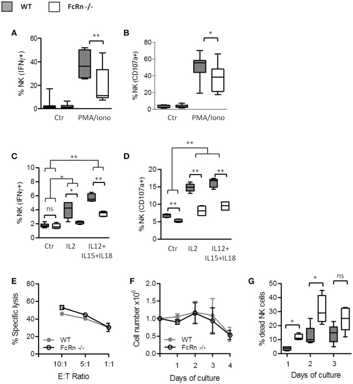 Influence of FcRn on NK cell functions and in vitro expansion. Purified splenic NK cells were analyzed by flow cytometry for (A) the intracellular measurement of IFN-γ and (B) the surface expression of the late endosomal marker CD107a, after 4-h incubation at 37°C without (Ctr) or with PMA (100 ng/mL)/ionomycine (500 ng/mL). Data are median ± Min to Max analyzed from eight independent experiments using pooled NK cells from 2 mice. Freshly isolated splenocytes were seeded in RMPI 1640 complete medium supplemented with 5,000 U/ml rhIL2 or with 5 ng/ml rhIL12, 50 ng/ml rhIL15, and 10 ng/ml rhIL18 for 4-h (C,D) . Within splenocytes, CD3 − /NK1.1 + /NKp46 + cells were analyzed for (C) the intracellular expression of IFN-γ and (D) the surface expression of CD107a by flow cytometry. Data are median ± Min to Max from two independent experiments using pooled spleens from 2 mice. (E) Cytotoxicity assay was performed against CFSE-labeled YAC-1 target cells with different ratios of purified NK cells previously maintained overnight in RPMI 1640 complete medium supplemented with 50 U/ml of rhIL2 ( n = 3). The results were expressed as means ± SEM. (F,G) Purified splenic NK cells were plated in complete medium supplemented with 5,000 U/ml rhIL2. (F) The living cell numbers and (G) the percentage of dead cells were determined daily by manual cell counting using trypan blue in Malassez chamber ( n = 3). The results were expressed as mean ± SEM (F) and median ± Min to Max (G) . ns = not significant * p ≤ 0.05 and ** p ≤ 0.005 using two-tailed non-parametric and unpaired Wilcoxon-Mann-Whitney test.