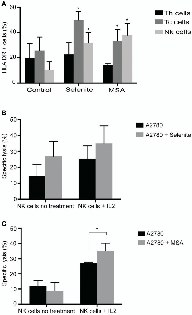 Selenite and MSA sensitizes tumor cells to NK cell mediated killing. Direct effects on immune cells (activation, shift in population) assessed after 24 h treatment with selenite and MSA. (A) HLA-DR expression on immune cell subsets following treatment with selenite and MSA (10 μM) ( n = 3). (B,C) Specific killing of tumor cells monitored after co incubation with non-activated or overnight IL-2 activated NK cells with A2780 cells pretreated with selenite or MSA (10 μM) ( n = 3). Columns represent mean specific killing (%); bar indicates SD . MSA and/or selenite treated samples were compared to the control ( * p ≤ 0.05).