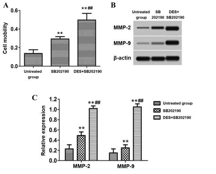 Effect of inhibition of the p38 signaling pathway on cell migration and the protein expression of MMPs in astrocytes of the untreated, SB202190 and (DES) + SB202190 groups. (A) Cell migration was determined by a Transwell migration assay. (B) Representative western blot bands for the protein expression of MMP-2 and MMP-9 in the untreated, SB202190 and DES + SB202190 groups. (C) Densitometric analysis was performed to obtain the relative expression level of target proteins with β-actin as the internal reference. SB202190 was employed as an inhibitor of the p38 signaling pathway, while DES was employed as an activator of protein phosphatase 2A. **P