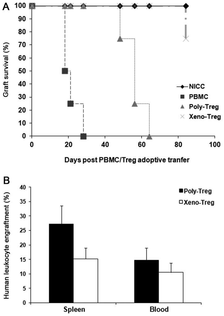 <t>Xeno-Treg</t> suppress rejection of islet xenografts in humanized mice. (A) Percentage of graft survival in mice administered 1×10 7 CD25 + cell-depleted human <t>PBMCs</t> with or without 1×10 6 Poly-Treg or Xeno-Treg. Graft survival was monitored 18, 21, 28, 48, 56, 63 and 84 days post cell transfer. (B) Flow cytometric analysis of the percentage of human leukocyte engraftment in the spleen and peripheral blood of NOD-SCID interleukin-2 receptor γ −/− mice after PBMC plus Treg adoptive transfer. Data were acquired on day 63 for Poly-Treg or day 84 for Xeno-Treg. Data are presented as the means ± standard deviation of three independent experiments. CD, cluster of differentiation; PBMC, peripheral blood mononuclear cell; Poly-Treg, polyclonal Treg; Tregs, regulatory T cells; Xeno-Treg, Treg with xenoantigen specificity.