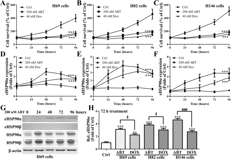 Cell viabilities of (A) H69, (B) H82, and (C) H146 cells under the treatment of ABT-737 or doxorubicin. Enzyme-linked immunosorbent assay (ELISA) assay revealed the existence and concentrations of extracellular heat shock protein 90α (HSP 90α) in the medium of (D) H69, (E) H82, and (F) H146 cells under the treatment of ABT-737 or doxorubicin; (G) representative and (H) summary of Western blot assay for the existence and quantities of HSP 90α and β in culture medium of various cell types (as in eHSP90α and eHSP90β), and the amount of intracellular HSP 90α and β. * P