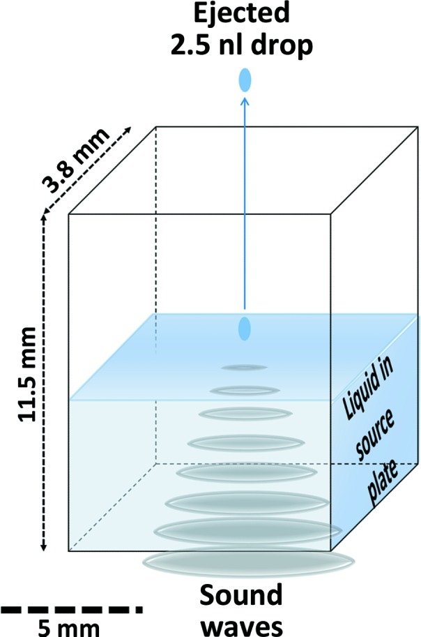 Acoustic droplet ejection (ADE). ADE uses sound energy to transfer variable micro-droplets ( e.g.  nanolitres or picolitres) of solution (including suspended solids) from a crystallization well, through a short air column (∼1cm) to data-collection media. Sound-wave energy from the transducer is channelled to the focal point ( i.e.  the ejection zone), displacing the surface, where a controlled ejection occurs. Droplet size is governed by the wavelength of the sound emitted and this proportionality yields accurate ejected volumes. In this work, an Echo 550 liquid handler was used to harvest protein crystals from two kinds of  in situ  plates (MiTeGen  In Situ -1) onto MiTeGen MicroMeshes.