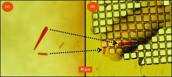 Click to mount: ejecting a selected crystal cluster. We selected a cluster of three crystals and carefully aligned these crystals with the ejection zone. We then used the Echo 550 to harvest these crystals onto a micro-mesh. ( a ) shows a view of the crystallization well; ( b ) shows a micro-mesh image.