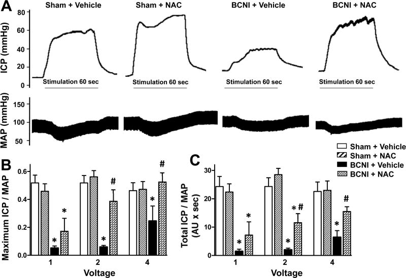 Erectile function is decreased in rats with cavernous nerve injury, which is prevented by treatment with a denitrosylating agent NAC. Sham-injured and BCNI-rats were treated with vehicle or NAC (300 mg/kg/day) starting 2 days before BCNI or sham injury and continuing for 2 weeks after the surgery. Electrical stimulation of the cavernous nerve was performed as voltage response (1, 2, and 4 V) at 16 Hz with square-wave duration of 5 msec for 1 min. Representative ICP and MAP responses to 4 V electrical stimulation (A). The stimulus interval is indicated by a solid bar. Erectile response to electrical stimulation of the cavernous nerve is indicated by maximal ICP/MAP (B) and total ICP/MAP (C). Each bar represents the mean ± SEM of 5-8 rats. *P