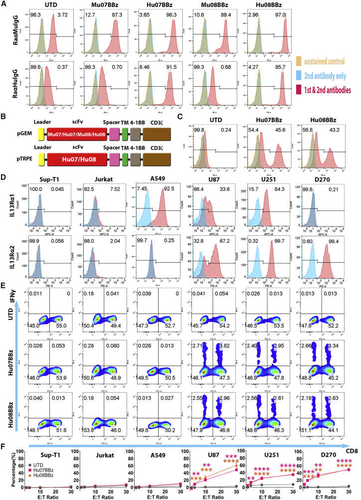 Humanized IL-13Rα2-Targeting CAR T Cells (A) Flow cytometric detection of CAR expression by human T cells, after mRNA electroporation of murine and humanized scFv- (07 and 08) based CAR constructs using rabbit anti-mouse or rabbit anti-human IgG antibodies. (B) Vector maps of tested anti-IL-13Rα2 CAR design based on the size of each components. (C) CAR expression staining of the humanized IL-13Rα2 CAR transduced T cells used in the co-culture experiments. (D) IL-13Rα1 and IL-13Rα2 expression analysis on the human tumor cell lines (Sup-T1, Jurkat, A549, U87, U251, and D270) with isotype antibodies staining control in blue. (E) Flow-based intracellular cytokine (IFNγ) staining of the humanized IL-13Rα2 CAR T cells co-cultured with human tumor cell lines in (D) controlled with un-transduced T cells (UTD). Human CD8 was stained to distinguish the CD4-positive and CD8-positive subgroups of T cells along the x axis. (F) Chromium release assays of humanized IL-13Rα2 CAR T cells co-cultured with tumor cell lines in (D) was analyzed at different effector/target (E:T) ratios (1:1, 3:1, 10:1, and 30:1) compared with the UTD T cells with one-way ANOVA post hoc Tukey test. **p
