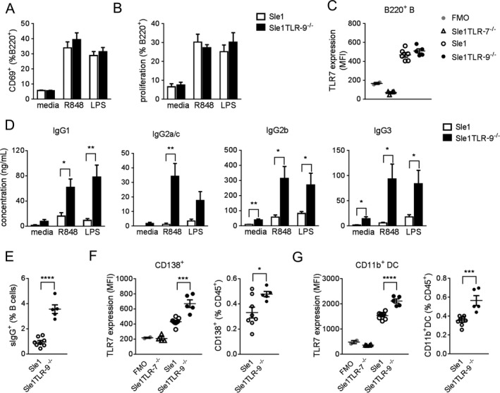 Regulation of antibody production by Toll‐like receptor 9 (TLR‐9) in Sle1 mice. A and B , B cell (B220+) activation ( A ) and proliferation ( B ) in splenocytes from young (8–10‐week‐old) Sle1 and Sle1 TLR‐9 −/− mice that were left untreated (media), stimulated with R848 (0.01 μg/ml), or stimulated with lipopolysaccharide (LPS; 1 μg/ml). B cell activation was measured by flow cytometry after 24 hours of stimulation and is shown as the percentage of CD69+ cells. B cell proliferation was measured according to the 5,6‐carboxyfluorescein succinimidyl ester dilution after 72 hours of stimulation. C , TLR‐7 expression, measured by intracellular flow cytometry, in mouse splenic B220+ B cells. TLR‐7–deficient Sle1 mice ( Sle1 TLR‐7 −/− ) (n = 4) and fluorescence minus one (FMO) samples were used as negative controls. MFI = median fluorescence intensity. D , Levels of IgG subtypes, measured by Luminex, in Sle1 and Sle1 TLR‐9 −/− mouse culture supernatants collected after 96 hours of incubation. Cultures were left untreated, stimulated with R848, or stimulated with LPS. E , Expression of surface IgG (sIgG) (IgG1/IgG2a/IgG2b/IgG3) on freshly isolated B220+CD19+ splenocytes from Sle1 and Sle1 TLR‐9 −/− mice. F and G , TLR‐7 expression and frequencies of splenic CD138+ plasma/plasmablasts ( F ) and CD11b+ dendritic cells (DCs) ( G ) in Sle1 and Sle1 TLR‐9 −/− mice. In A , B , and D , bars show the mean ± SEM from 2–3 independent experiments (n = 9–15 mice per group). Data were assessed by multiple t ‐tests, and statistical significance was corrected using the Holm‐Sidak method. In C , E , F , and G , data are from 1 representative experiment with 8–10‐week‐old mice (n = 8 Sle1 and 5 Sle1 TLR‐9 −/− mice). Circles represent individual mice; horizontal lines and error bars show the mean ± SEM. Significance was determined by Student's t ‐test. * = P