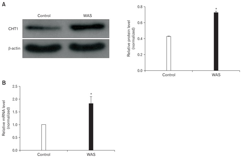 Protein and mRNA levels of high-affinity choline transporter 1 <t>(CHT1)</t> in the colon. (A) Western blot analysis revealing that CHT1 protein expression in water avoidance stress (WAS) rats is increased compared to that in control rats. (B) Quantitative real-time polymerase chain reaction analysis showing that the CHT1 mRNA levels of WAS rats are higher than those of control rats. * P