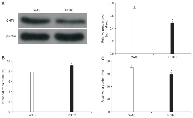 Influence of ammonium pyrrolidine dithiocarbamate (PDTC) on high-affinity choline transporter 1 (CHT1) expression and intestinal motility. (A) Immunoblots (left) and histogram (right) for CHT1 in the colon from water avoidance stress (WAS) and PDTC-treated rats showing that the obtained CHT1 and β-actin level ratios of the PDTC group are significantly decreased compared to that in WAS rats. (B) The intestinal transit time of WAS rats are increased after treatment with PDTC. (C) The fecal water content of PDTC group is decreased compared with the WAS rats. * P