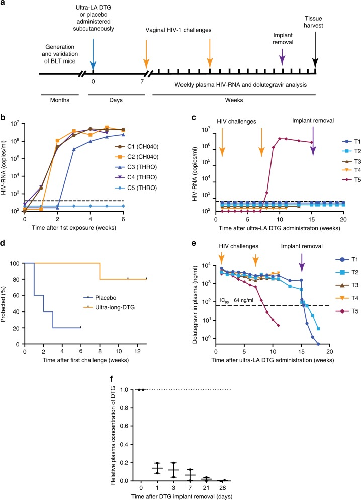A single dose of ultra-LA dolutegravir protects against multiple high dose HIV-1 challenges. a Experimental design. BLT mice were treated with ultra-LA dolutegravir ( n = 5) or placebo ( n = 5) and vaginally exposed to HIV CH040 or HIV THRO 1 week, and 7 weeks later. The implant was removed from two mice 8 weeks after second HIV challenge. Cell-associated HIV-DNA in multiple tissues was analyzed at the end of the experiment. Plasma HIV-RNA concentration in control ( b ) and treated mice ( c ). d Time-to-events plot illustrating the estimated probability of protection ( p = 0.02). e Plasma concentration of dolutegravir. f Plasma concentration of dolutegravir ( n = 2) after the implant removal relative to dolutegravir concentration immediately before the implant removal (dotted line). Individual measurements and median ± range is shown. Experiment was conducted once