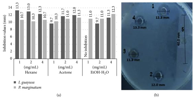 I. guayusa Loes and P. marginatum Jacq fraction antimicrobial activity against P. intermedia <t>ATCC</t> 25611 at three concentrations. (a) Antimicrobial activities (inhibitory halos mm) from I. guayusa Loes and P. marginatum Jacq fractions against P. intermedia. (b) 1: P. marginatum Jacq 4 mg/mL ethanol : water fraction, 12.3 mm inhibitory halo; 2: I. guayusa Loes 4 mg/mL acetone fraction, 12.0 mm inhibitory halo; 3: P. marginatum Jacq; 4 mg/mL acetone fraction, 11.3 mm inhibitory halo; 4: I. guayusa Loes 4 mg/mL hexane fraction, 13.3 mm inhibitory halo; 5: 50 IU/mL erythromycin positive control, 40 mm inhibitory halo.