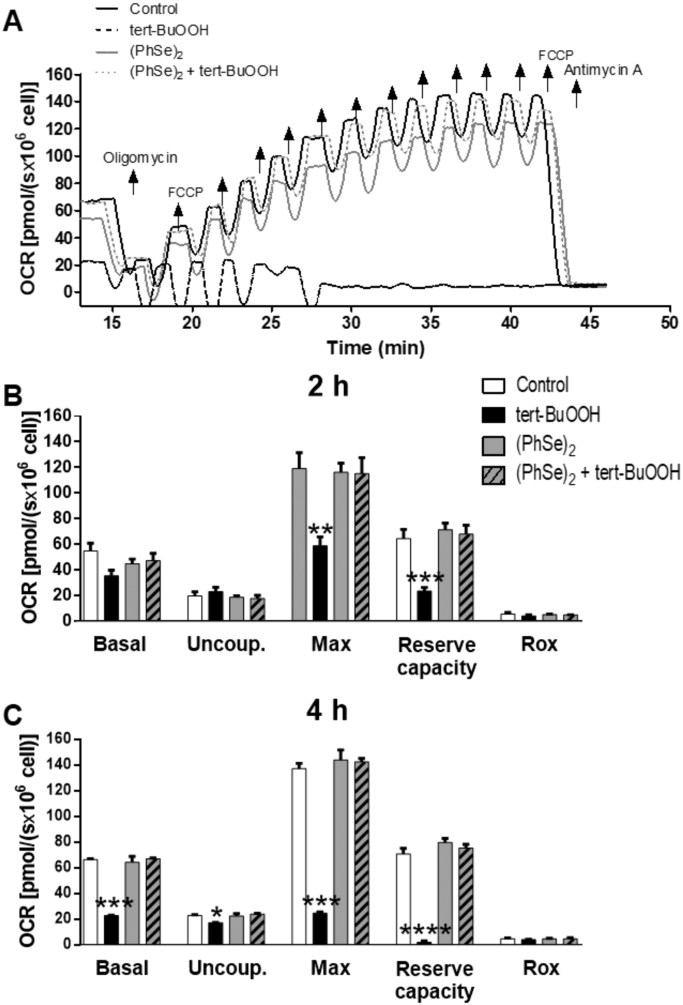 (PhSe) 2 prevents the mitochondrial dysfunction induced by tert-BuOOH (A) Representative respirometry assay of intact HT22 cells pre-incubated with 2 μM (PhSe) 2 for 48 h followed the exposure or not with tert-BuOOH (40 μM) for additional 4 h. After OCR stabilization, the following electron transport system (ETS) modulators were added: Oligomycin (1.25 μM) to measure uncoupled respiration; sequential additions (0.5 μM) of FCCP to achieve maximum respiration; and antimycin A (2.5 μM) to determine residual oxygen consumption rates. OCR records and mitochondrial reserve capacity of HT22 cells exposed or not with tert-BuOOH (40 μM) for 2 h (B) and 4 h (C) were evaluated in DMEM-5% FBS in the following conditions: basal respiration; after inhibition of ATP synthase with oligomycin (uncoupled respiration – Uncoup.); upon titration with FCCP (maximum respiration – Max); and after inhibition of the respiratory complex III with antimycin A (residual respiration – Rox). Data are represented as mean ± SEM (n = 4) * p