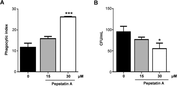 Effect of pepstatin A in interaction assay of P . brasiliensis and macrophage cells. P . brasiliensis yeast cells were treated with pepstatin A on concentrations of 15 and 30 μM during 1 h before interaction assay. Pepstatin A increase phagocytosis (A) and enhance antifungal activity of macrophages reducing colony forming units (B). Data were analyzed using Student's t-test. Error bars correspond to the standard deviation of measurements performed in triplicate, and * indicates a significant difference (* p