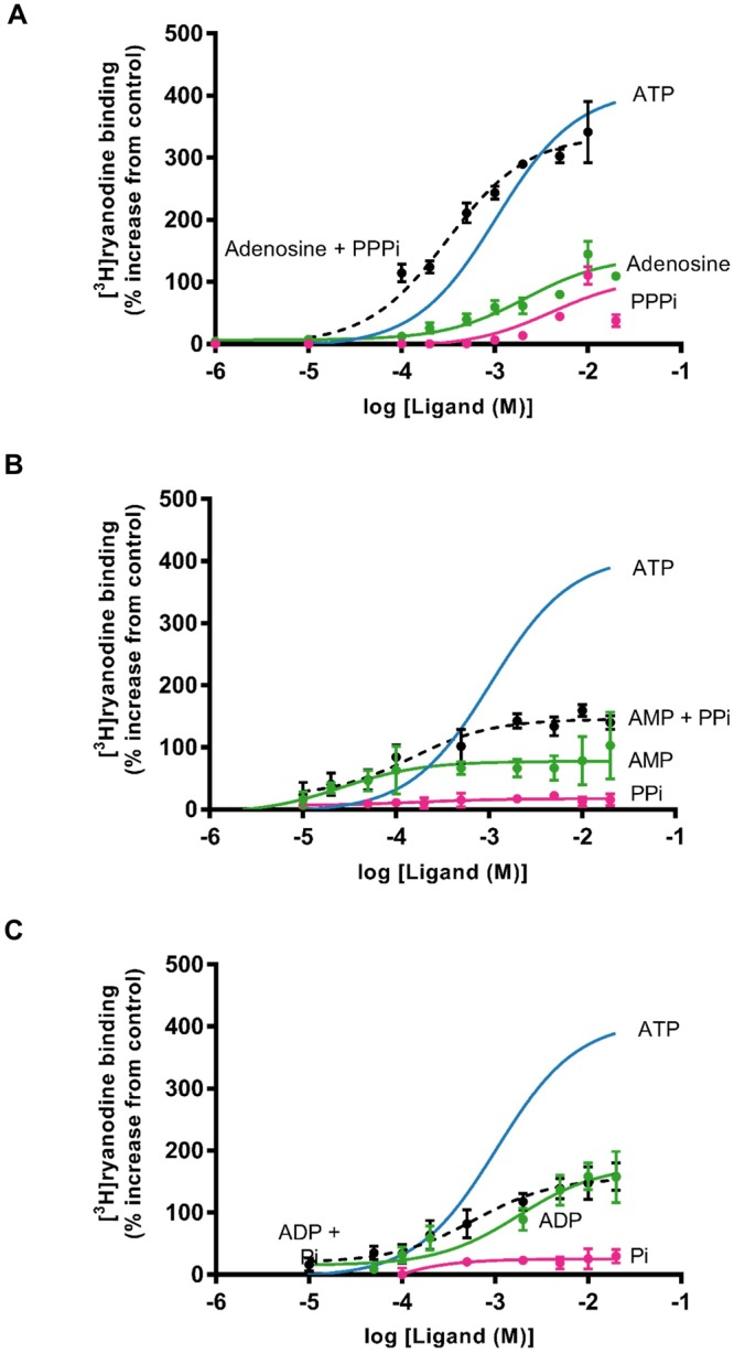 Investigating the ability of ATP fragments to stimulate [ 3 H]ryanodine binding as effectively as ATP alone. For clarity, in each graph, the ATP data from Fig. 3B is shown as a solid blue line. ( A ) Comparison of the effects of PPPi alone (pink), adenosine alone (green) and adenosine in the presence of 10 mM PPPi (black dashed line). ( B ) Comparison of the effects of PPi alone (pink), AMP alone (green) and AMP in the presence of 10 mM PPi (black dashed line). ( C ) Comparison of the effects of Pi alone (pink), ADP alone (green) and ADP in the presence of 10 mM Pi (black dashed line). Where combinations of ligands were used, they were added simultaneously at the start of the incubation period. The addition of Pi to ADP and PPi to AMP did not significantly increase binding above that observed with ADP (p = 0.2101) or AMP (p = 0.1917) alone whereas the addition of PPPi significantly increased binding above that observed with adenosine alone (**p