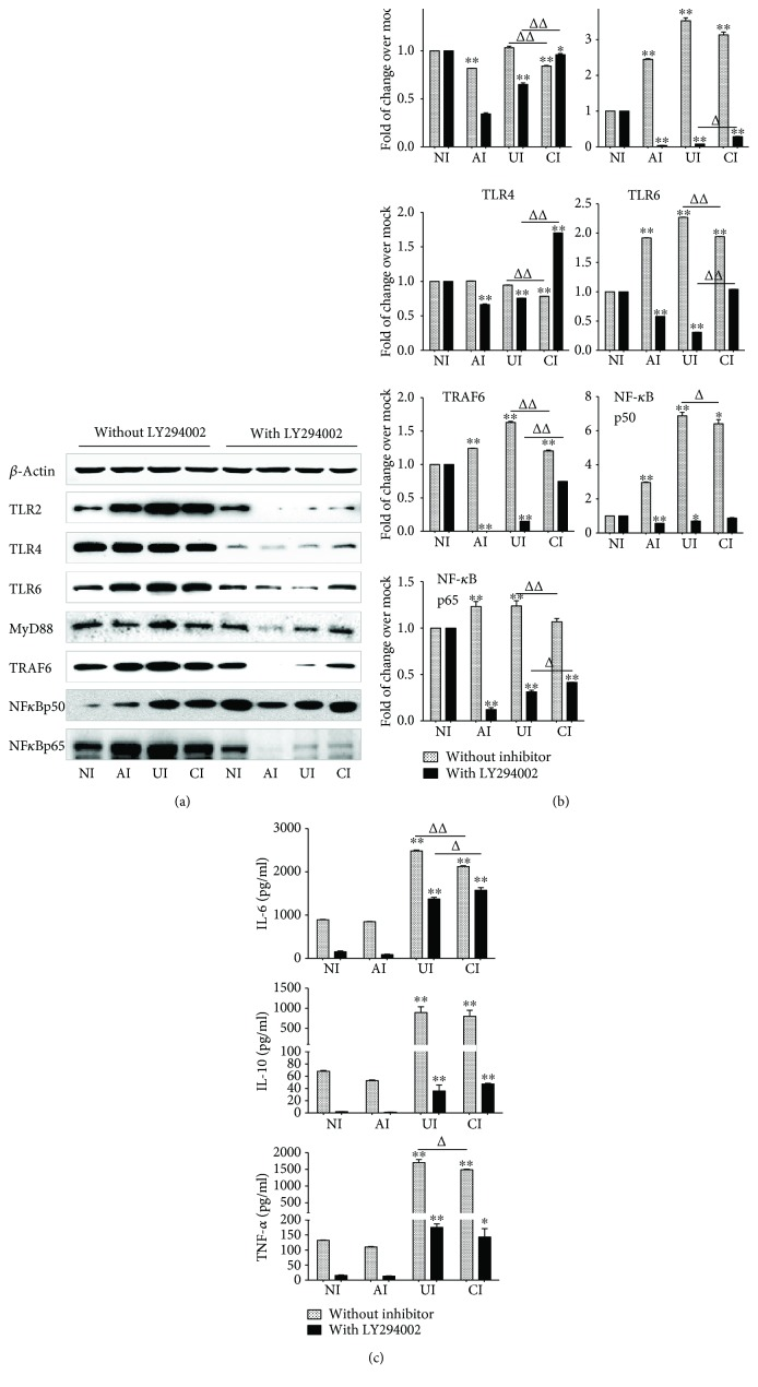 Involvement of PI3K signaling in the reduction of the expression of TLR ligands and elements of TLR signaling pathway in U937 cells to Mtb H37Rv infection in the <t>A549</t> cell coculture model. In the presence or absence of PI3K inhibitor LY294002, the coculture model of A549/U937 cells was infected with H37Rv mycobacteria from the upper chamber (A549 cells, AI), lower chamber (U937 cells, UI), or both chambers (A549 and U937 cells, CI) at a MOI of 3 for 18 h before the culture medium and U937 cells were harvested for analysis. (a) Representative blots of immunoblotting assay for the indicated components of TLR signaling cascade showed a reversed TLR signaling activity in U937 cells of the coinfection model in the presence of LY294002, in comparison with the absence of an inhibitor. (b) The fold of changes of proteins of interest in (a) semiquantitatively determined by densitometric assay using ImageJ software Fiji from three independent experiments. The ability of A549 cell-mediated reduction of TLR signaling activity in U937 cells was reversed by the addition of LY294002. (c) Concentrations of TNF- α , IL-10, and IL-6 in culture media determined by ELISA; the A549 cell-mediated reduction of cytokines in H37Rv-infected U937 cells was reversed in the presence of PI3K inhibitor. Error bars represent the standard deviation (SD) from three independent experiments. Compared to noninfection (NI) control, ∗ p