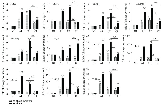 Impact of GSK3 β signaling in U937 cells in response to H37Rv infection. In the presence or absence of GSK3 β inhibitor LiCl, the coculture model of A549/U937 cells was infected with H37Rv mycobacteria from the upper chamber (A549 cells, AI), lower chamber (U937 cells, UI), or both chambers (A549 and U937 cells, CI) at a MOI of 3 for 18 h before the culture medium and U937 cells were harvested for analysis by RT-PCR assay. Inductions of indicated transcripts of U937 cells infected with H37Rv in different conditions. The data was presented as the fold of changes of indicated transcripts over the noninfected cells. An increased abundance of indicated TLR signaling and cytokines was observed in the presence of GSK3 β inhibitor LiCl, but the trend of a reduction of TLR-mediated inflammatory responses was not altered by the addition of LiCl. Error bars represent the standard deviation (SD) from three independent experiments. Compared to noninfection (NI) control, ∗ p