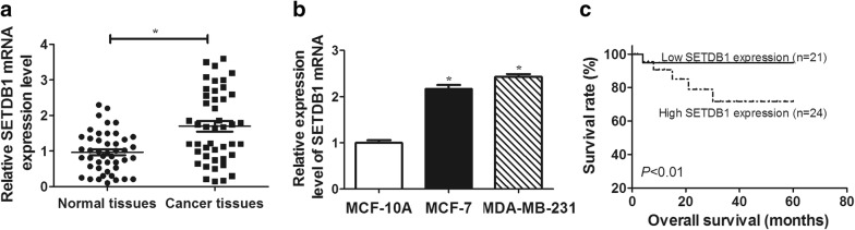 SETDB1 mRNA expression was upregulated in breast cancer tissues and cell lines. a SETDB1 mRNA expression was measured in 45 pairs breast cancer tissues and adjacent normal breast tissues by qRT-PCR assay. b qRT-PCR assay of SETDB1 mRNA level in breast cancer cell lines (MCF-7, MDA-MB-231) and human mammary epithelial cell line (MCF-10A). c Kaplan–Meier survival assay and log-rank test were used to evaluate the correlation between SETDB1 mRNA level and breast cancer patient prognosis in 45 breast cancer patients in low- and high-risk groups based on SETDB1 mRNA expression. * P