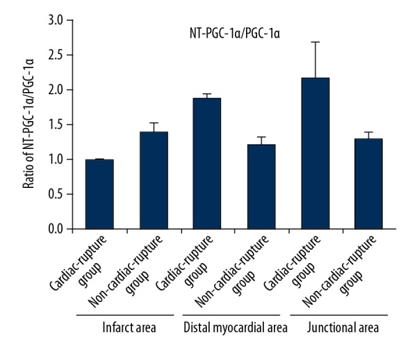 Ratio of NT- PGC-1α/PGC-1α. The proportion of myocardial NT-PGC-1α/PGC-1α in the infarcted area of the MI group was lower than that in the Non-MI group, while the proportion of myocardial NT-PGC-1α/PGC-1α in the junctional and distant myocardial areas was higher than that in the Non-MI group.