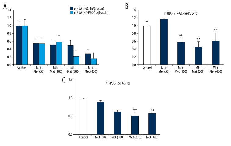 The relationship between the mRNA levels of PGC-1α and NT-PGC-1α and the doses of metformin in mice after MI. ( A ) The results of RT-PCR mRNA level of NT-PGC-1α and PGC-1α after being treated different doses of metformin. ( B ) The ratio of myocardial NT-PGC-1α/PGC-1α after being treated different doses of metformin. ( C ) The ratio of control group NT-PGC-1α/PGC-1α after being treated different doses of metformin. ** P