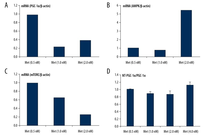 The mRNA level of metformin on AMPK-mTORC/PGC-1α signaling pathway in SD-NRVCs. ( A–D ) RT-PCR was used to detect the related gene expression levels of AMPK-mTORC/PGC-1α signaling pathway. Expression levels of NT-PGC-1α/PGC-1α, mTOR, and mRNA after treatment with different doses of metformin.