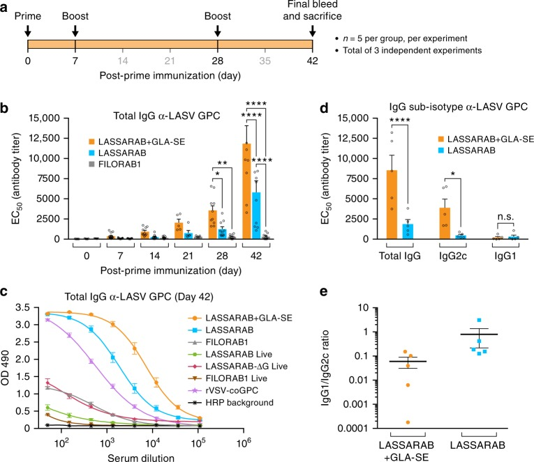 Analysis of the humoral response towards Lassa virus glycoprotein. C57BL/6 mice were immunized IM in the gastrocnemius muscle with either 10 μg of β-propiolactone inactivated viral particles in PBS or adjuvanted with 5 μg of GLA, a TLR-4 agonist formulated in 2% of stable emulsion (SE); LASSARAB+GLA-SE, LASSARAB, FILORAB1 groups) and boosted two times with the same amount on day 7 and 28 ( a ). Immunizations with replication-competent viruses were executed with a single time inoculation of 10 6 ffu or pfu virus IM in the gastrocnemius (rc-LASSARAB; rc-FILORAB1 groups and rVSV-GPC). b The EC 50 values (obtained from the 4PL regression ELISA curve) of the total IgG titers against LASV GPC are plotted since day 0 until day 42. Error bars are representative of the standard error mean (SEM) and is calculated from 15 mice per group. Statistical significance was calculated by using 2-way ANOVA–post-hoc Tukey's Honest Significant Difference Test. c ELISA of total IgG against LASV GPC of all day 42 groups are shown for all immunized groups. ELISA curves are generated from 4PL regression. Error bars are representative of the SEM of OD 490 values (five mice per group, in triplicates). d Day 35 EC 50 antibody titer of IgG sub-isotype (IgG2c and IgG1) against LASV GPC of sera from LASSARAB+GLA-SE and LASSARAB group was analyzed. Error bars are the SEM of a total of five mice per group and statistical significance by 2-way ANOVA (post-hoc Tukey's Honest Significant Difference Test). e The ratios of the respective EC 50 antibody titers IgG1/IgG2c are plotted and the F test was applied to check for variance difference ( p