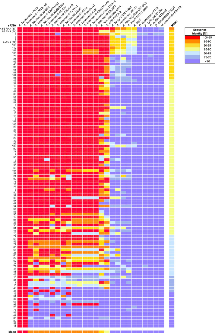 sRNA conservation in representative members of the order Pseudomonadales. Genomes of multiple Acinetobacter species, Pseudomonas species, and Moraxella catarrhalis were compared using GLSEARCH. The colour scale shows the percentage sequence identity of the 110 sRNAs compared to the reference sequence from A. baumannii ATCC 17978.