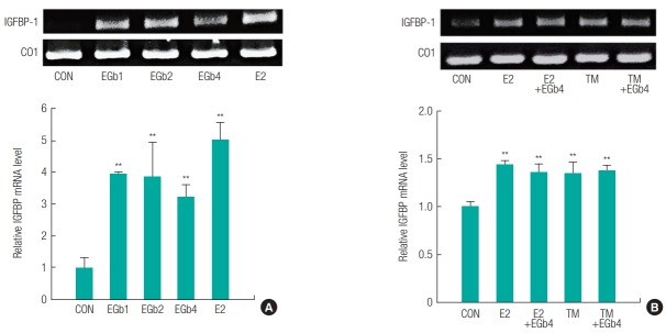 Relative mRNA expression of estrogen-relative genes in liver from immature female rats exposed to Ginkgo biloba extract (EGb761) alone (A) or the combination of EGb761 and 17β-estradiol (E2) or tamoxifen (TM) (B). The total RNA was extracted using TRIzol in liver obtained from the immature female rats exposed to respective compounds. The mRNA levels (IGFBP) were measured using RT-PCR along with cytochrome c Oxidase I (CO1) mRNA as the internal standard. The PCR product was identified using a gel documentation and quantified by ImageJ 1.43u. The results are expressed as mean ± SD of three separate experiments for each group. Values significantly different from the control are indicated by an asterisk (**p