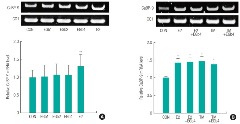 Relative mRNA expression of estrogen-relative genes in uterus from immature female rats exposed to Ginkgo biloba extract (EGb761) alone (A) or the combination of EGb761 and 17β-estradiol (E2) or tamoxifen (TM) (B). The total RNA was extracted using TRIzol in liver obtained from the immature female rats exposed to respective compounds. The mRNA levels of CaBP-9 were measured using RT-PCR along with cytochrome c Oxidase I (CO1) mRNA as the internal standard. The PCR product was identified using a gel documentation and quantified by ImageJ 1.43u. The results are expressed as mean ± SD of three separate experiments for each group. Values significantly different from the control are indicated by an asterisk (*p