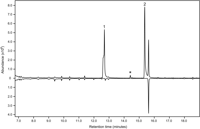 Total ion chromatograms of aeration samples (DB-WAX column) of headspace volatiles produced by adult male (top trace) and female (bottom, inverted trace) Phymatodes pusillus ssp. pusillus . Male-specific compounds are 2-methyl-1-butanol (1), 1-hexanol (2) and 2-methyl-1-pentanol (*). The system contaminant present in both samples at 15.7 min is diacetone alcohol. The shoulder on the front of peak 1 is a chromatographic artefact also observed with synthetic 2-methyl-1-butanol