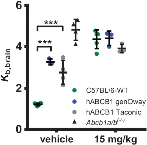 ABCB1 transport activity at the BBB measured with ( R )-[ 11 C]verapamil PET imaging. Brain uptake of ( R )-[ 11 C]verapamil expressed as brain-to-blood radioactivity concentration ratio ( K b,brain ) at 60 min after radiotracer injection in female C57BL/6 mice (veh: n = 6, tariquidar: n = 5), hABCB1 mice (genOway; veh: n = 3, tariquidar: n = 3), and hABCB1 mice (Taconic; veh: n = 4, tariquidar: n = 3) treated with vehicle solution (2.5% [w/v] aq. dextrose solution) or tariquidar (15 mg/kg body weight) at 2 h before radiotracer injection. For comparison, K b,brain in vehicle-treated Abcb1a/b (–/–) mice (n = 4) is also shown [ 36 ]. Data are mean ± standard deviation. Statistical significance was determined by 2-way ANOVA with Bonferroni post-hoc test. **p