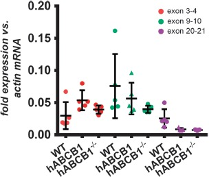 Exon junction-specific mRNA expression of Abcb1a. Abundance of Abcb1a mRNAs with different lengths was assessed using assays covering the indicated exon junctions in female wild-type mice ( n = 5), hABCB1 mice ( n = 5), as well as in hABCB1 mice ( n = 5) crossed to a Cre-deleter mouse strain (human ABCB1 –/– ). No differential expression between strains was found within each assay location. Data are mean ± standard deviation. Statistical significance was determined by 1-way ANOVA with Tukey's honest significant difference post-hoc test, significance level p
