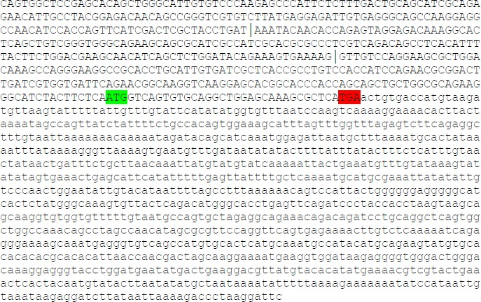 Full exonic sequence of Abcb1a. Capital letters indicate the coding sequence, lower case indicate untranslated bases. ATG start codons that could establish an open reading frame are indicated green. Exon junctions are indicated by an |. Pink letters indicate the central base of the probes of the TaqMan assays used (according manufactures information).