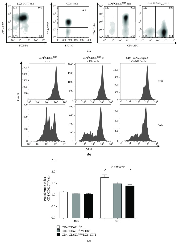 Flow cytometry analysis of the spleen CD3 + DX5 + NKT, CD8 + T, CD4 + CD62L high , and CD4 + CD62L low cells of Balb/c mice after separation by MACS and FACS sorting (a). Proliferation (b) and proliferation index (c) of CFSE-labeled CD4 + CD62L high cells after 48 h and 96 h of monoculture or coculture with CD8 + T cells or CD3 + DX5 + NKT. Results are given as mean + SEM. Experiments were repeated at least three times ( ∗ P