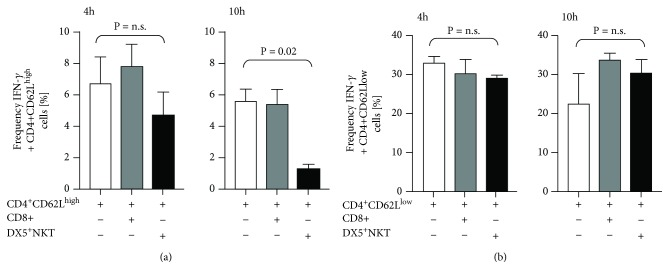 Intracellular flow cytometry detection of IFN- γ in CD4 + CD62L high (a) and CD4 + CD62L low cells (b) after 4 h and 10 h of monoculture or coculture with CD8 + T cells or CD3 + DX5 + NKT. Results are given as mean + SEM. Experiments were repeated at least three times ( ∗ P