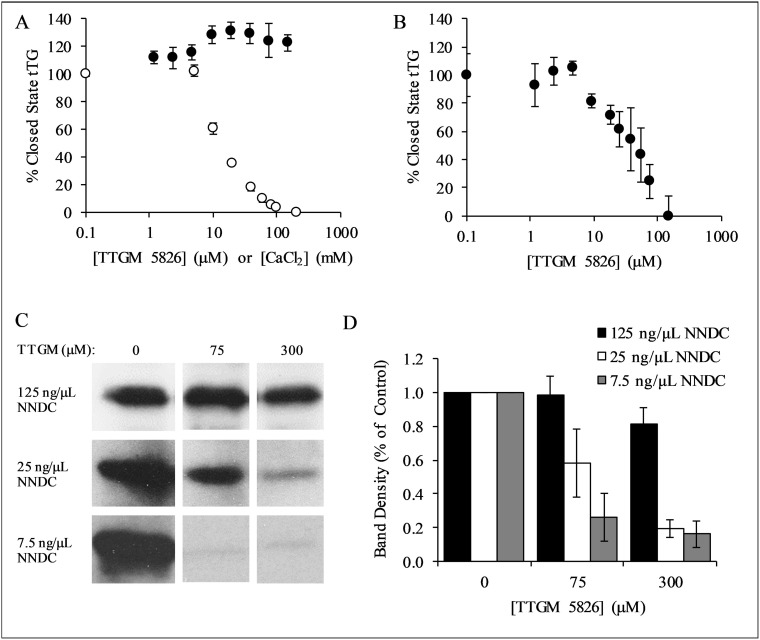 Characterization of TTGM 5826 ( A ) tTG (0.4 μM) was incubated with the indicated amounts of TTGM 5826 (black circles) or CaCl 2 (white circles) at room temperature for 5 minutes, after which bodipy-labeled GTPγS was added to the reactions. The fluorescence of the bodipy label was measured (ex: 504 nm, em: 520 nm), and the percentage of closed state tTG determined. ( B ) tTG (0.4 μM) was incubated with 10 mM CaCl 2 and the indicated amount of TTGM 5826 for 5 minutes, after which bodipy-labeled GTPγS and 20 mM EDTA were added. The reaction was incubated for an additional 10 minutes and then analyzed as described in ( A ). ( C ) Recombinantly expressed tTG (43 nM) was incubated at room temperature for 15 minutes with 10 mM CaCl 2 , 10 mM DTT, 62.5 μM BPA, and the indicated amounts of NNDC and of TTGM 5826. The proteins were resolved by SDS-PAGE and the extent that BPA was incorporated into NNDC was determined by probing the resulting blot with HRP-conjugated streptavidin. ( D ) Quantification of the data shown in ( C ). Band density was determined using ImageJ, and was calculated with respect to the DMSO control from each experiment. The error bars in panels ( A ), ( B ), and ( D ) represent the SD from three independent experiments. The lowest concentration data point for each series in ( A ) and ( B ) is a control experiment (no TTGM 5826 or CaCl 2 ), and is assigned a low, non-zero value to allow plotting on a logarithmic axis.