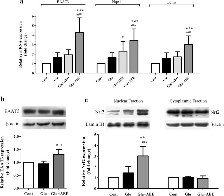 Effect of AE leaf extracts on expression of Nrf2-regulated antioxidant genes in glutamate-treated HT22 cells. ( a ) Quantitative real-time RT PCR analysis of EAAT3, Nqo1, and Gclm mRNA expression in untreated HT22 cells (control) or cells exposed to 5 mM glutamate alone or glutamate combined with either AEH or AEE at 50 μg/mL for 20 h. β-actin served as an internal control to normalize the mRNA expression levels. ( b ) Western blot analysis of EAAT3 protein in whole cell lysates isolated from untreated HT22 cells (control) or cells exposed to 5 mM glutamate alone or glutamate combined with 50 μg/mL AEE for 22 h. ( c ) Western blot analysis of Nrf2 protein in nuclear and cytoplasmic fractions isolated from HT22 cells exposed for 1 h to the similar treatment conditions as in ( b ). Lamin B1 and β-actin were used as endogenous loading controls to normalize the protein expression levels from nuclear and cytoplasmic fractions/whole cell lysates, respectively. Data are expressed as the means ± SD, # P