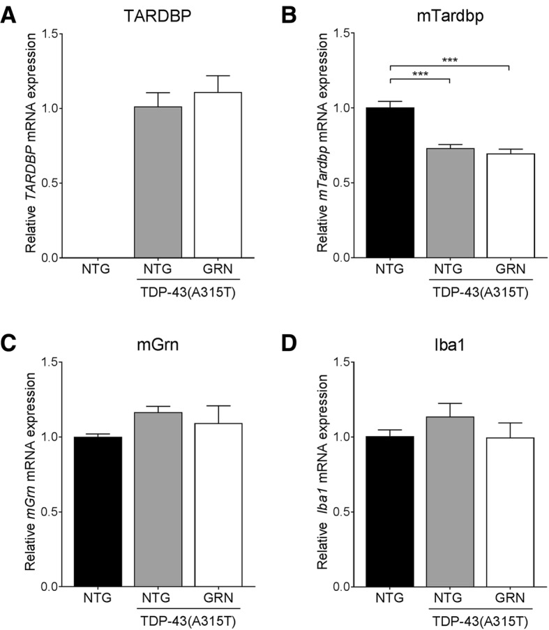 PGRN overexpression has no effect on TDP-43 RNA levels. RNA expression of the human TDP-43(A315T) transgene ( a ), mouse Tardbp ( b ) and mouse Grn ( c ) in the spinal cord is unchanged by PGRN overexpression. *** p